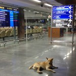 A Stray Dog at the Airport